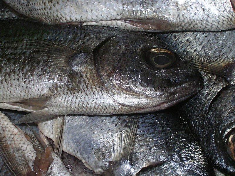 ВБашкирии названы виновные вмассовой погибели рыбы вреке Уфа